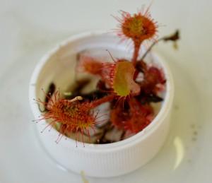 Poznávačka rostliny (1)