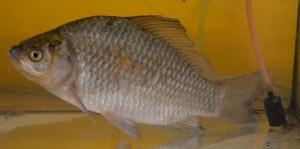 Poznávačka ryby (9)