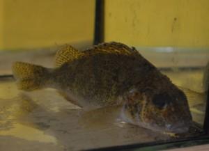 Poznávačka ryby (8)